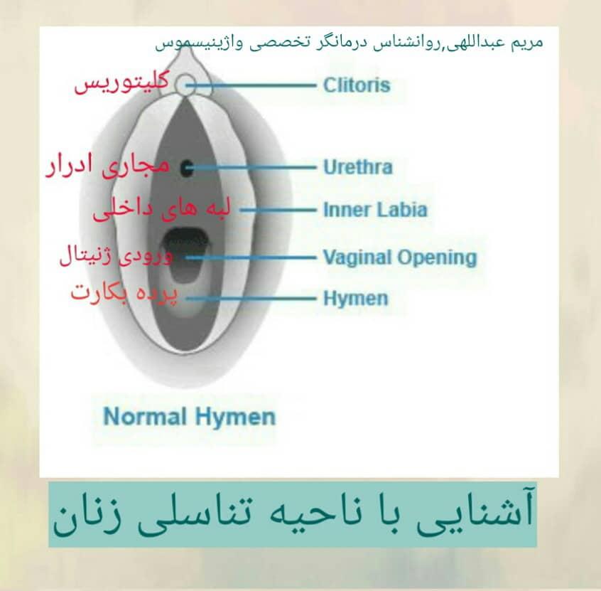 شکل واژن طبیعی
